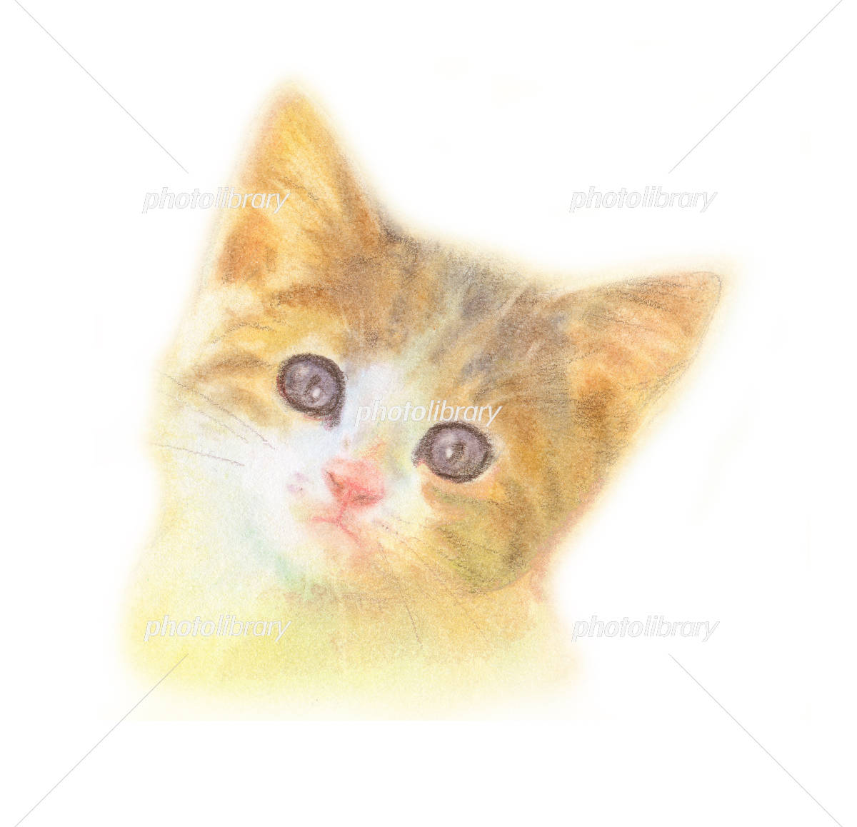 子猫 三毛猫 イラスト素材 4331084 フォトライブラリー Photolibrary