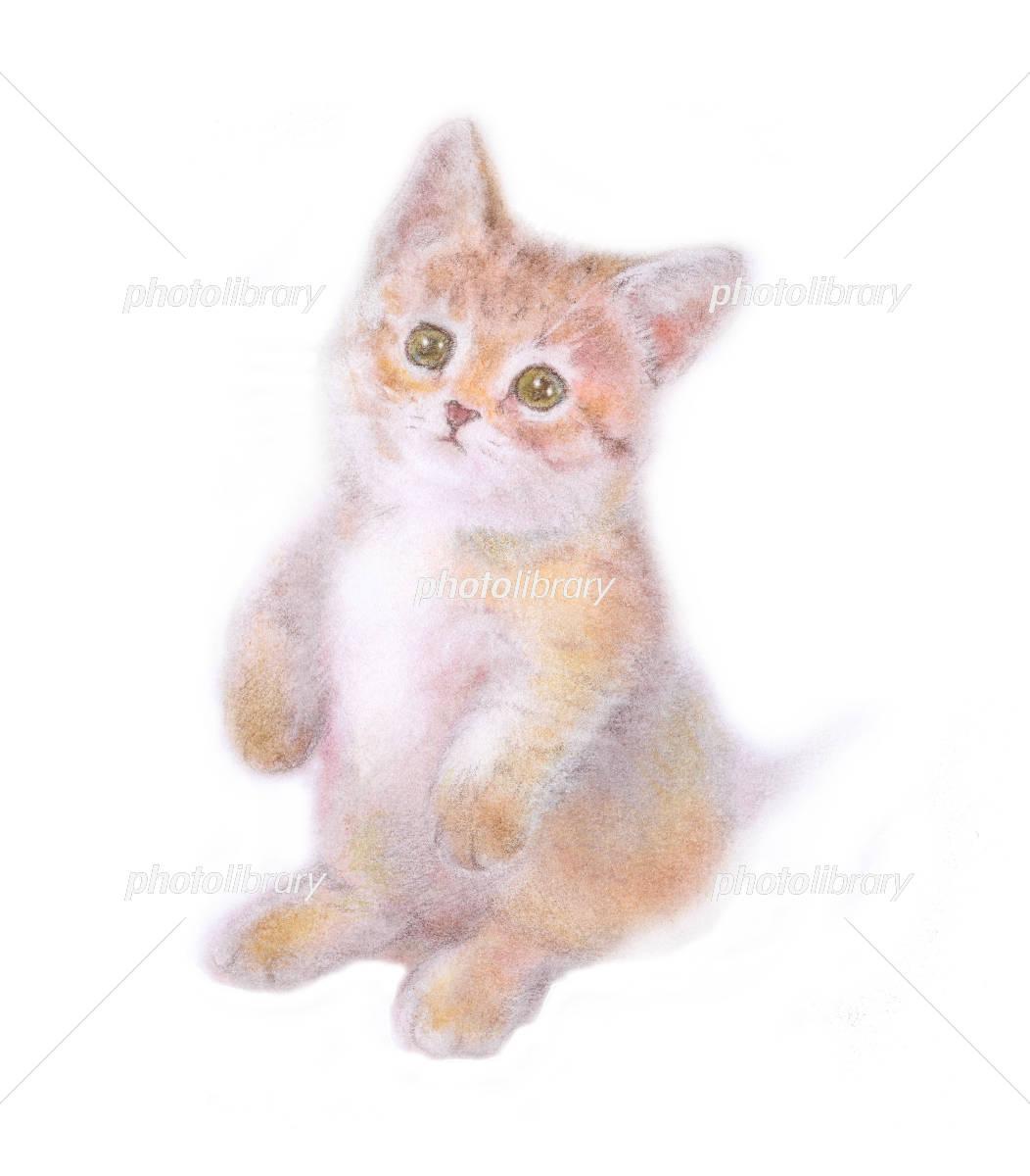 子猫 マンチカン 足の短い子猫 イラスト素材 4331618 フォト