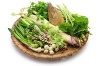 Wild vegetable Stock photo [4338648] Wild