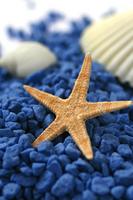 Starfish Stock photo [142684] Starfish