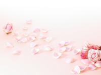 rose Stock photo [4408893] rose