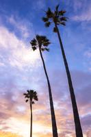 Palm tree Stock photo [4491281] Palm
