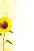 Sunflower summer greeting background [4496031] sunflower