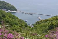 Gohonmatsu park (Mihonoseki) Stock photo [4496828] Gohonmatsu