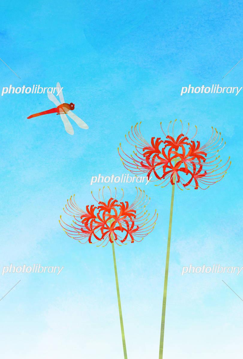 彼岸花と赤トンボ イラスト素材 フォトライブラリー Photolibrary