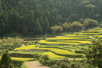 Terraced rice fields Stock photo [4641863] Tokushima