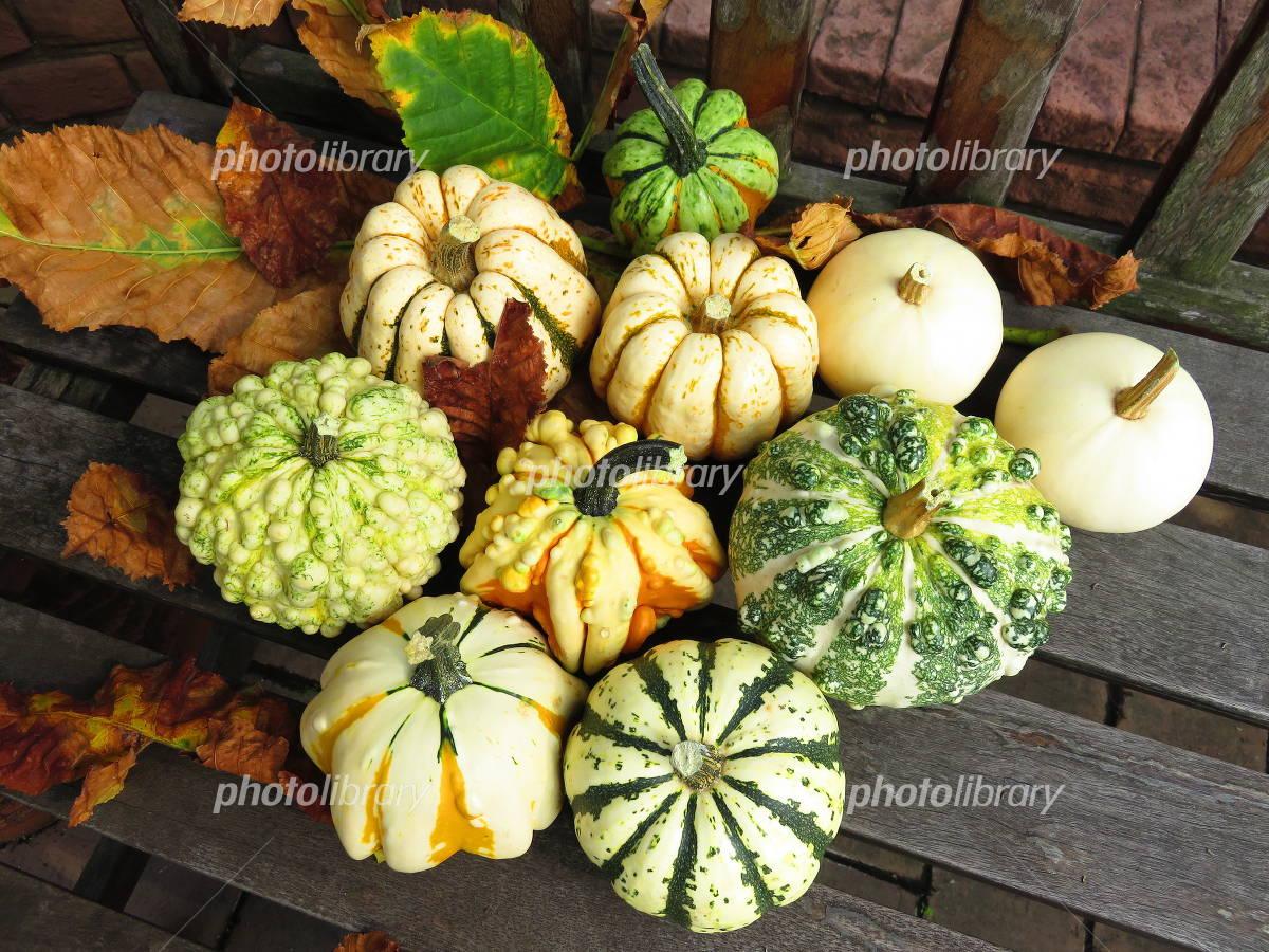 Toy pumpkin Photo
