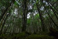 Forest of Yatsugatake Stock photo [4702887] Yatsugatake