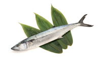 Spanish mackerel 1 white-tailed back Sasa Stock photo [4705139] Spanish