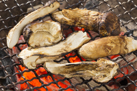Grilled Matsutake Stock photo [4706360] Grilled