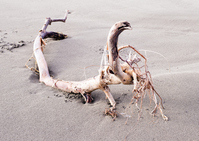 Driftwood Stock photo [4708953] Driftwood