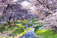 Of Temple River cherry trees Stock photo [4763880] spring