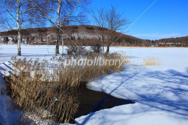 冬の長野県白樺湖 写真素材 4863031 フォトライブラリー