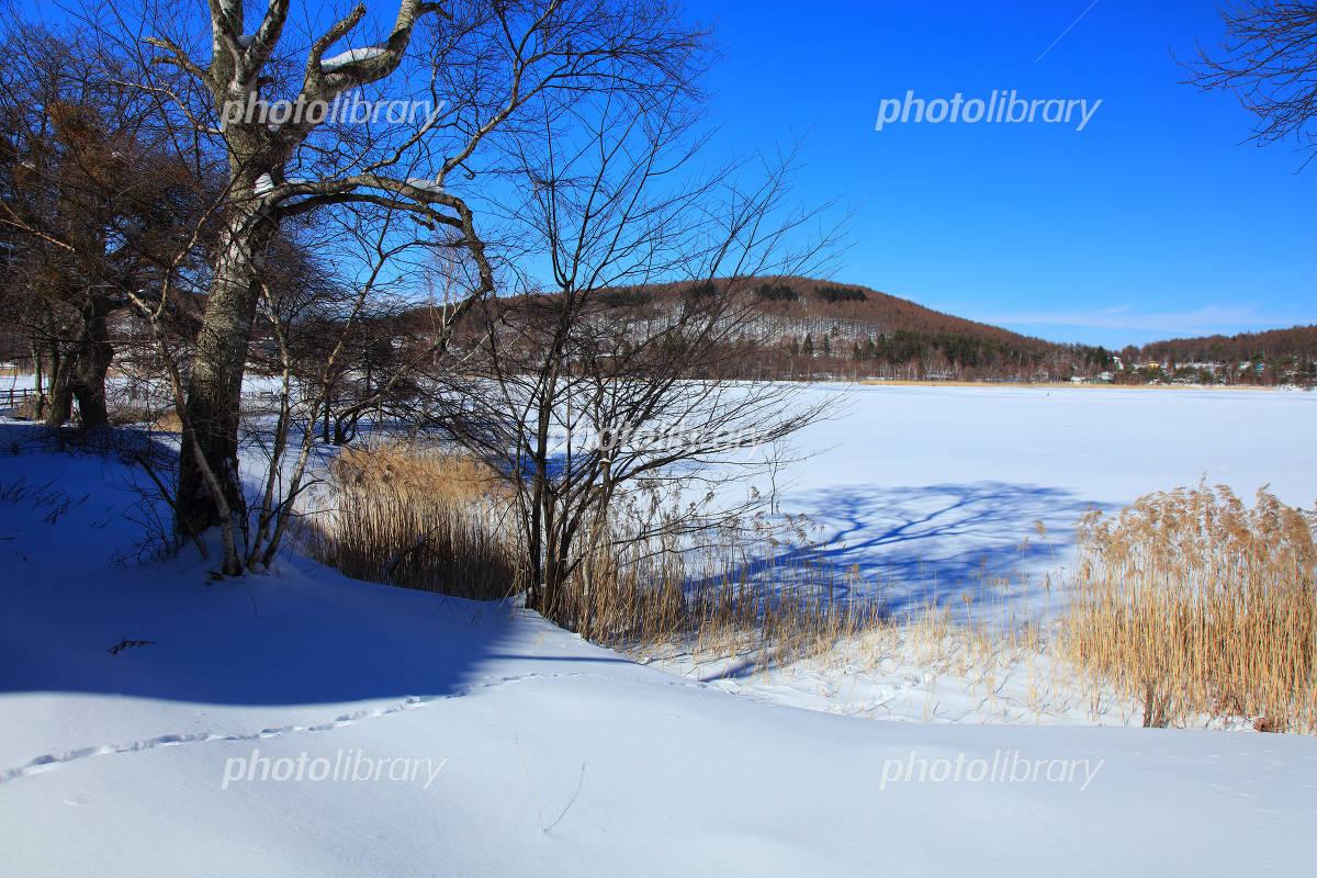 冬の長野県白樺湖 写真素材 4863041 フォトライブラリー