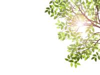 Fresh green sunshine filtering through foliage ecology Wakaba [4971795] Fresh