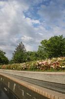 城山公園 花壇