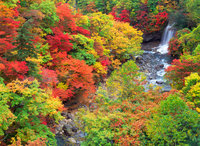 Autumn leaves of Matsukawa valley Stock photo [165965] Iwate