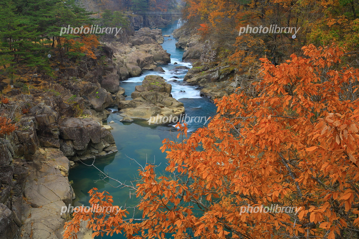 Autumn leaves of Shirami River Photo