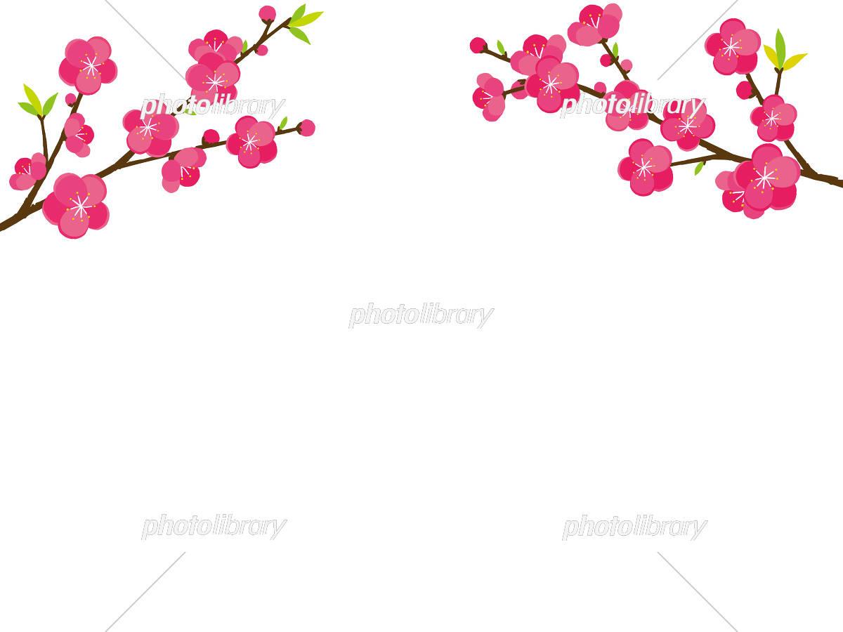 ももの花 イラスト イラスト素材 5406494 フォトライブラリー