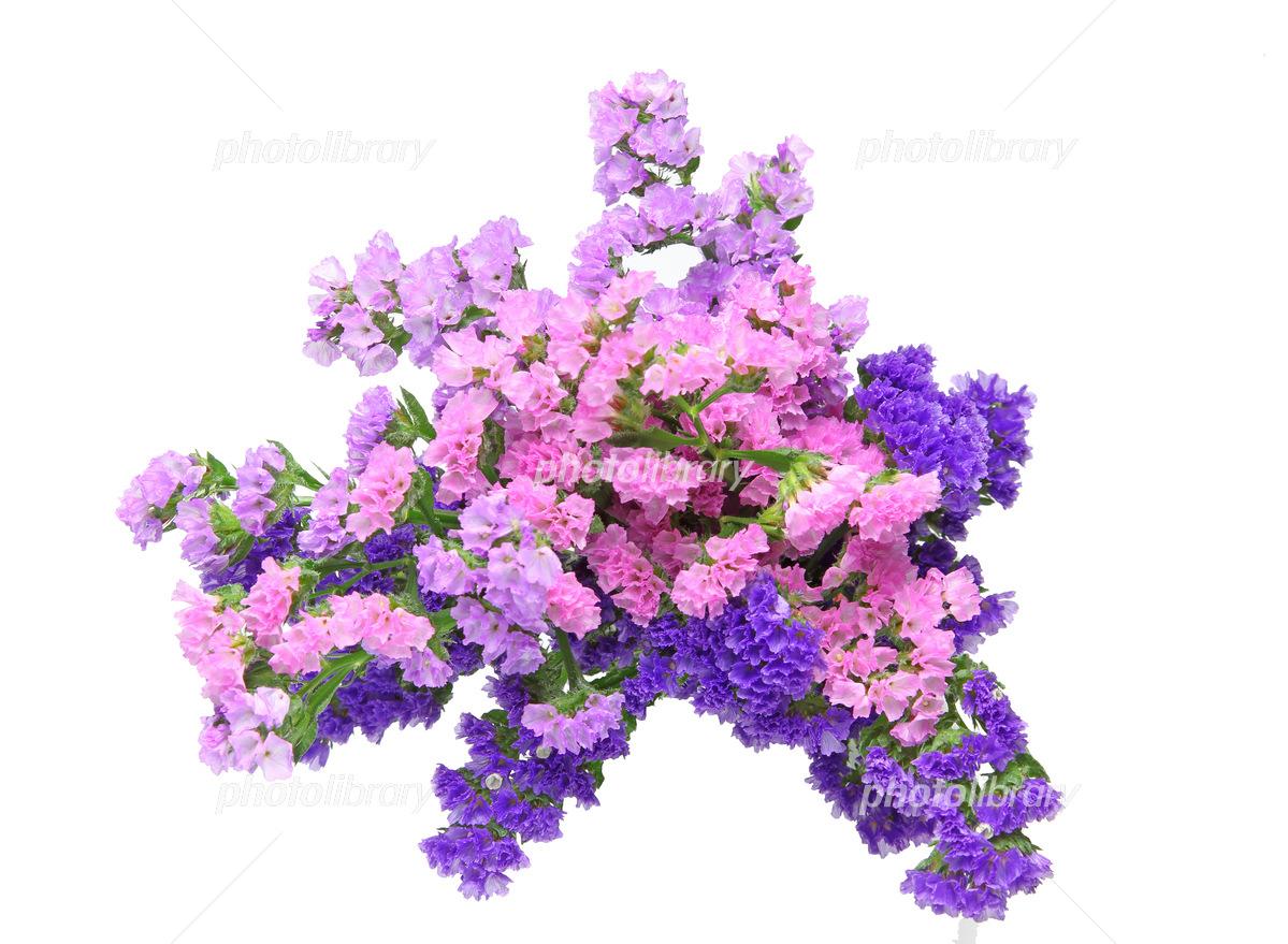 スターチスの花束 写真素材 5407925 フォトライブラリー Photolibrary