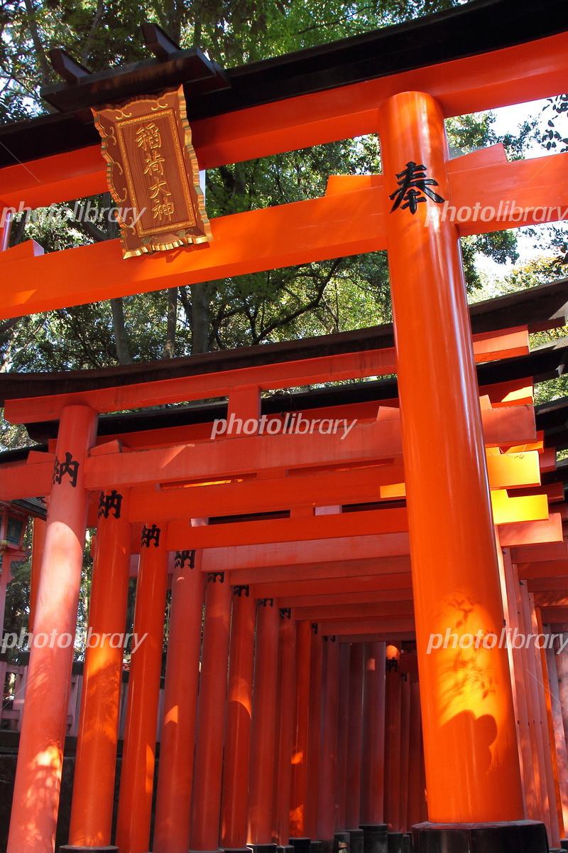 京都 伏見稲荷大社 鳥居 写真素材 5408608 フォトライブラリー