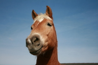 Horse and blue sky Stock photo [208326] Horse