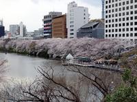 外濠の桜 カナルカフェ