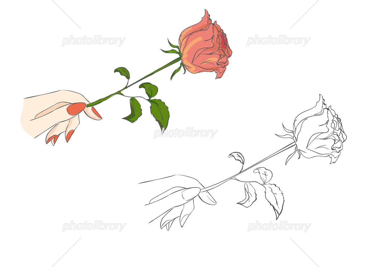 オシャレイラスト バラを持つ手 イラスト素材 フォトライブラリー Photolibrary