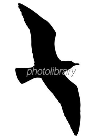 鳥 写真素材 282710 無料 フォトライブラリー Photolibrary