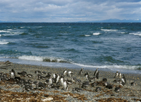 Chile Punta Arenas Penguin Stock photo [391137] Landscape