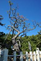 Pine plumage Stock photo [455580] Shizuoka