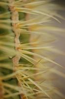 Cactus Stock photo [500257] Cactus