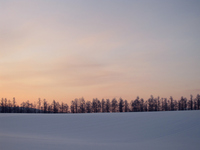 Snowy field sunrise Stock photo [503939] Snow