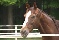 Horse Stock photo [505756] Horse