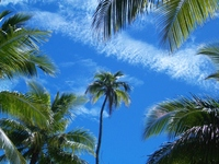 Palm tree Stock photo [547623] Palm