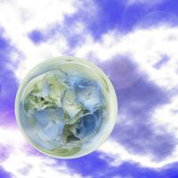 Hydrangea and sky Stock photo [547866] Hydrangea