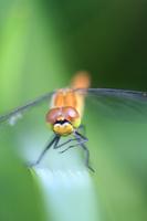 Cossack dance pose dragonfly Stock photo [550160] Akiacane