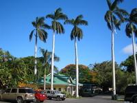 Hawaii Island bakery Stock photo [591075] Palm