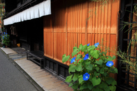 Takayama Kamisan'no town streets and morning glory Stock photo [595645] Hida