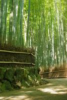 Sagano of bamboo forest Stock photo [912079] Bamboo