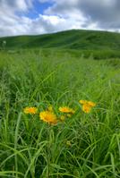 Yellow wild chrysanthemum Stock photo [914139] Chrysanthemum