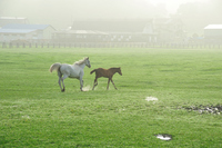 Parent-child horse to apply a fog of ranch Stock photo [920720] Shizunai