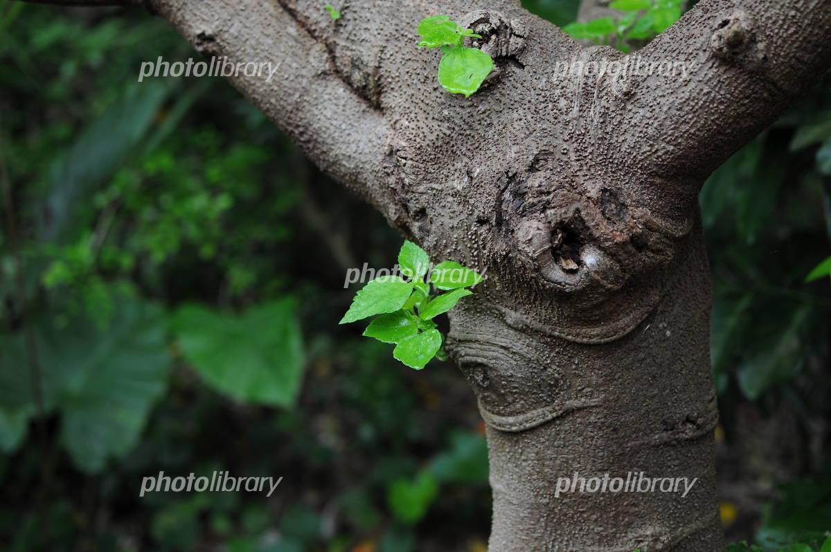 樹木の青葉