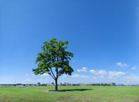 One tree Stock photo [1018221] Cityscape
