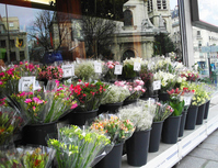 Paris florist storefront storefront shop flower bouquet storefront Stock photo [1019266] Beam