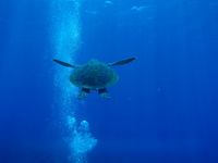 Sea turtle Stock photo [1021841] Sea