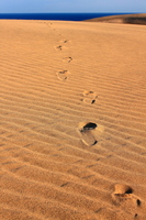 Wind ripples and footprints Stock photo [1022041] Sanin