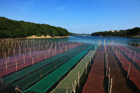 Seaweed farming Ago Bay Stock photo [1127421] Triple