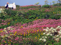 Flower garden of Ibuki Stock photo [1128087] Mt.