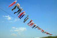 Carp streamer Stock photo [1129287] Carp